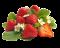 jahody a lesné plody